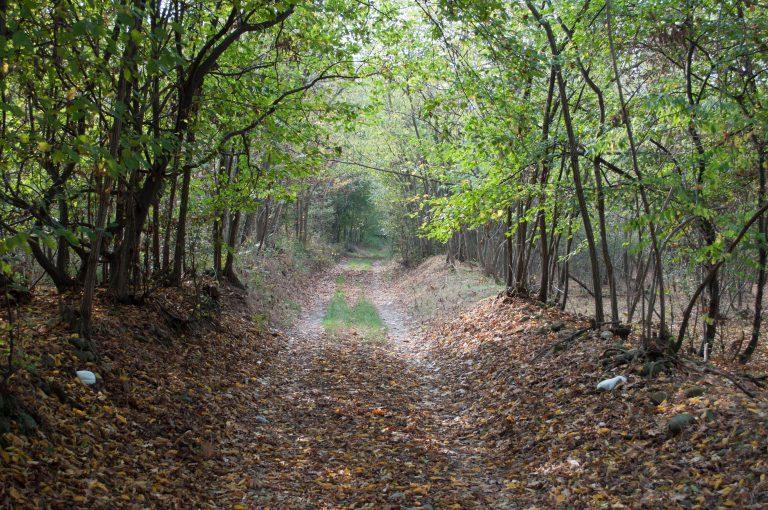 Sentiero nei boschi Barone canavese